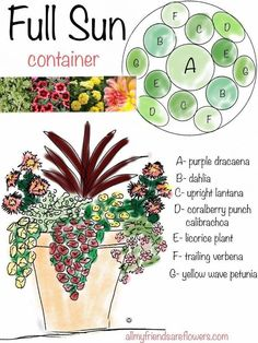 all my friends are flowers: full sun container planting plan.- all my friends are flowers: full sun container planting plan, annuals all my friends are flowers: full sun container planting plan, annuals - Full Sun Container Plants, Full Sun Plants, Container Flowers, Container Gardening, Full Sun Flowers, Succulent Containers, Sun Loving Plants, Full Sun Annuals, Red Plants