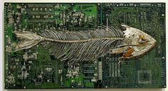 Peter McFarlane Transforms Old Circuit Boards into Gorgeous, Poignant Fossil Art Tiny Dinosaur, Horse Galloping, Eco Architecture, Computer Architecture, Mixed Media Sculpture, Old Computers, Circuit Board, Best Model, Sustainable Design