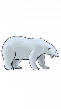 Polar bear drawing step step