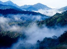 Silent Valley National Park - located in the Nilgiri Hills, Mukkali, Mannarkkad, Palakkad District, Kerala, South India.