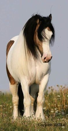Draft horses are so beautiful! All The Pretty Horses, Beautiful Horses, Animals Beautiful, Big Horses, Horse Love, Horse Pictures, Animal Pictures, Cheval Pie, Animals And Pets