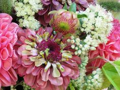 Detail: Zinnia 'Queen Red Lime'