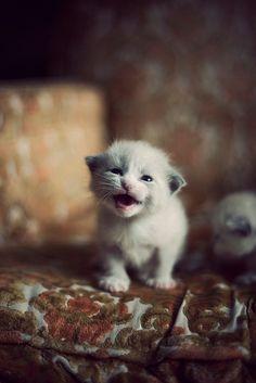 """Hear me roar! Mew!"" Maybe like this?:)"