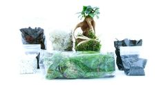 Green Factory lance ses kits terrariums DIY à moins de 30 € ! http://www.pariscotejardin.fr/2015/03/green-factory-lance-ses-kits-terrariums-diy-a-moins-de-30-e/