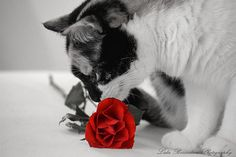 Beer loves roses by Lidie71, via Flickr
