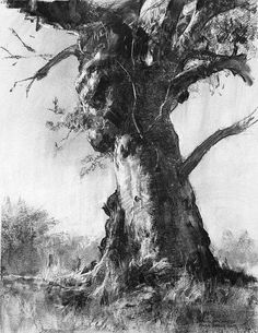 I love this tree drawing. an Australian Icon (charcoal) by John McCartin Charcoal ~ x Landscape Drawings, Landscape Art, Landscape Paintings, Gravure Illustration, Tree Illustration, Tree Drawings Pencil, Art Drawings, People Drawings, Drawing People