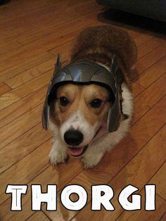 Awesome Robo!: Corgi + Thor Helmet = Thorgi