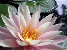 ♥♫Water Lilies - KEVIN KERN♥♫(Relaxing and soothing piano music)♥♫