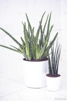 eine entspannende badezimmergestaltung mit pflanzen f rs bad badezimmergestaltung ziegelw nde. Black Bedroom Furniture Sets. Home Design Ideas