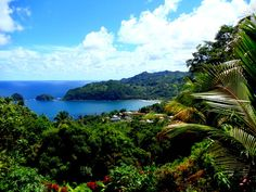 On the Island of Dominica.