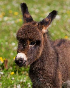 A cute baby donkey