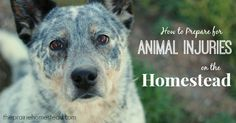How to Prepare for Animal Injuries on the Homestead