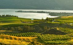 Visit Lake Chelan-The Official Site of the Lake Chelan Chamber of Commerce