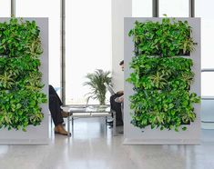 """35 Beautiful Living Wall Indoor Decoration Ideas To Be A Fresh Home - What were the hanging gardens of Babylon really like? As one of the """"Seven Great Wonders of the Ancient World,"""" they must have been pretty spectacular. Indoor Plant Wall, Indoor Plants, Leafy Plants, Diy Room Divider, Divider Ideas, Room Dividers, Freestanding Room Divider, Vertical Garden Systems, Privacy Walls"""