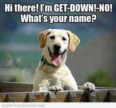 GET-DOWN!-NO!