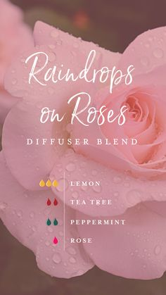 We've created a relaxing and indulgent night in with this Raindrops on Roses diffuser blend! A recipe of Tea Tree, Lemon, Rose, and Peppermint captures the feeling of being curled up on the sofa on a rainy night with a cup of tea and the fuzziest socks! #yleo #essentialoils #summerblend #diffuserblends