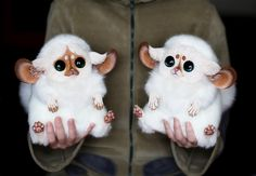 Inari Foxes by Santani.deviantart.com on @deviantART SO CUTE!