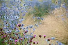 Blue and pink meadow