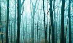 Image result for misty lady art