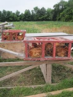 Homemade chicken crates for transport Urban Chickens, Meat Chickens, Chickens Backyard, Portable Chicken Coop, Diy Chicken Coop, Food Grade Barrels, Pheasant Farm, Wire Crate, Keeping Chickens