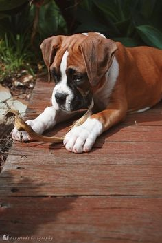 """What is this, and what am I supposed to do with it?""  (boxer)"