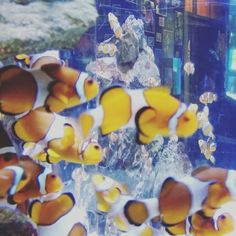 Finding nemo # water by leezilhendricks
