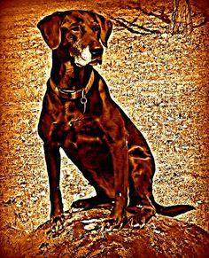 My Reba, she is the Dog!