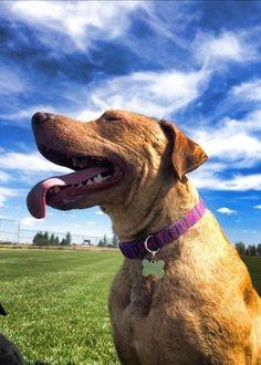 Angelita (Colorado)   43 Pets Who Need A Home For Christmas
