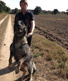 2AND4K9SECURITY-UK #K9 PATROL DOG UNITS