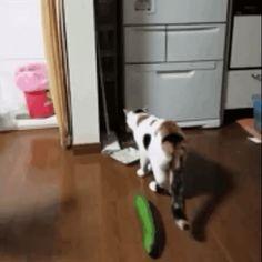 Cat Is Animal Animals Giff #16510 - Funny Cat Giffs|Funny Giffs|Cat Giffs