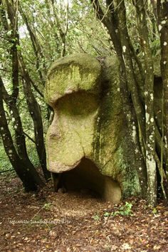 A misterious rock in the woods! Sardinia is also a place of ancient magic, of fairies (we call them janas), and of legends. Cool Rocks, Beautiful Rocks, Ancient Mysteries, Ancient Artifacts, Ancient Aliens, Ancient History, Nephilim Giants, Mysterious Places, Bizarre