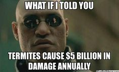 What if I told you.. termites cause 5 billion dollars in damage annually. Morpheus has it right-- Termites cause a lot of damage! A-1 specialists can help you identify problem areas around your home that might be attractive to termite colonies, as well as any signs of possible termite activity. Prevention is key!