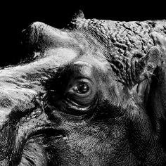 Beautiful Black and White Animals Photography