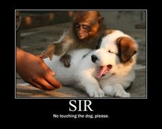 Please sir, no touching the dog.