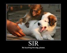 No touching the dog!