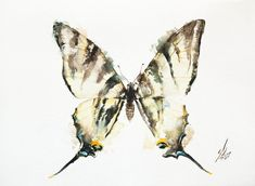 Buy Scarce Swallowtail - Iphiclides podalirius, Watercolour by Andrzej Rabiega on Artfinder. Discover thousands of other original paintings, prints, sculptures and photography from independent artists.