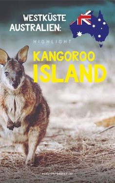 Kangaroo Island in Südaustralien - Highlights & Tipps meines Besuchs Australia Tours, Visit Australia, South Australia, Western Australia, Australia Travel, Perth, Brisbane Queensland, Great Barrier Reef, Work And Travel Australien