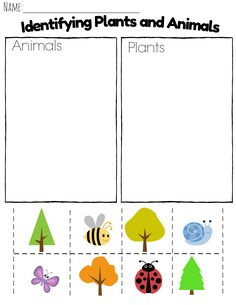 11 Worksheets Plants and Animals Alike and Not Alike paring Plants and Animals in Kindergarten The youngsters can enjoy Number Worksheets, Math Worksheets, Alphabet Worksheets. Kindergarten Science Activities, Preschool Learning Activities, Preschool Lessons, Preschool Worksheets, In Kindergarten, Number Worksheets, Alphabet Worksheets, Science Lessons, English Activities For Kids