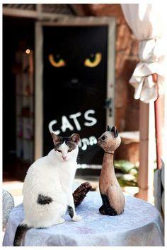 CATS. =^..^=