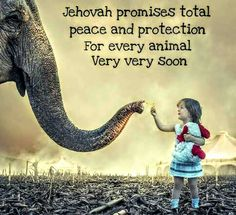 Isaiah 11 and 65 Jehovah Paradise, Proverbs 12 10, Jehovah S Witnesses, Jehovah Witness, Revelation 21, Bible Promises, Hope For The Future, Everlasting Life, Bible Truth