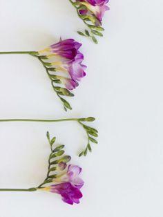 Lassen Sie sich vom Duft der nostalgischen Freesie verführen. #tollwasblumenmachen