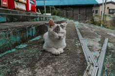 The island where cats are king