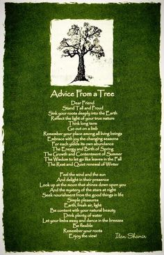 ☆ Advice From a Tree ~:By Ilan Shamir ☆ in memory of a Happy Tree lost in the storm last night 13 Feb 2014.                       This is sooo beautiful!