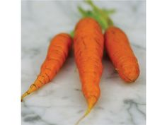 Some folks claim, that in the iconic Beatrix Potter illustration in which Peter mischievously nibbles a florid carrot, that he is eating a radish instead! Those who know about such things, say that he's enjoying a Nantes carrot, a French heirloom variety that would have been common at that time.This rosy, plump little carrot variety is deliciously sweet (& said sweetness will only be increased if you grow it without nasty synthetic chemicals, including fertilizers!) Seed av.@Bakers Nursery