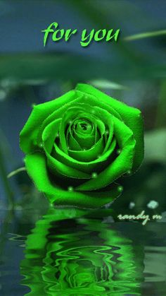 FOR YOU GREEN ROSE, WATER REFLECTION GIF