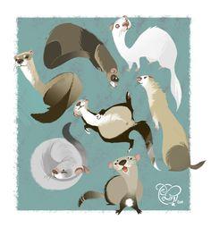 I love Ferrets!!!