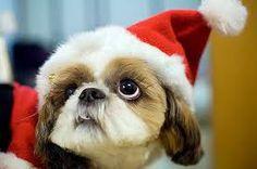 happy new year to dog born year