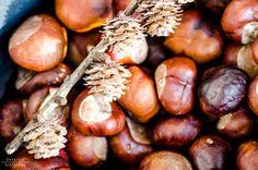 http://jschillingphoto.de/ Kastanien, herbst, frucht, autumn