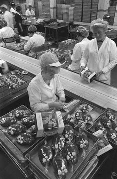 1966 cadburys Easter chocolate eggs.