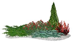 розы в средиземноморском цветнике - Google Search